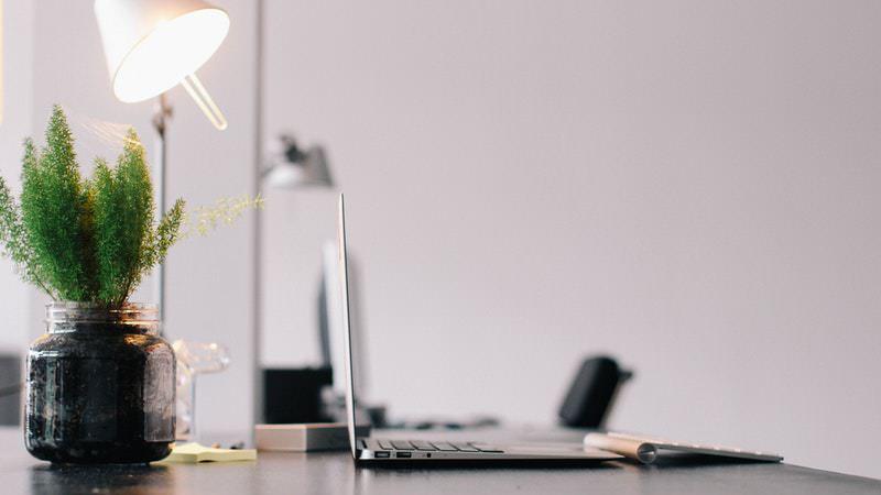 Cara Membuat Ruangan Kantor yang Nyaman | Tanaman dalam Kantor