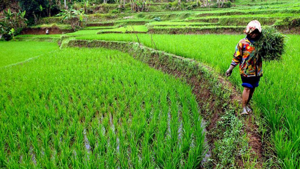 10 Startup Pangan Dan Pertanian Finalis Future Agro Challenge Indonesia