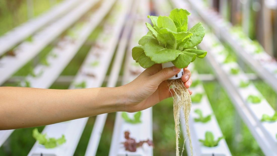 Penerapan teknologi pertanian | Ilustrasi